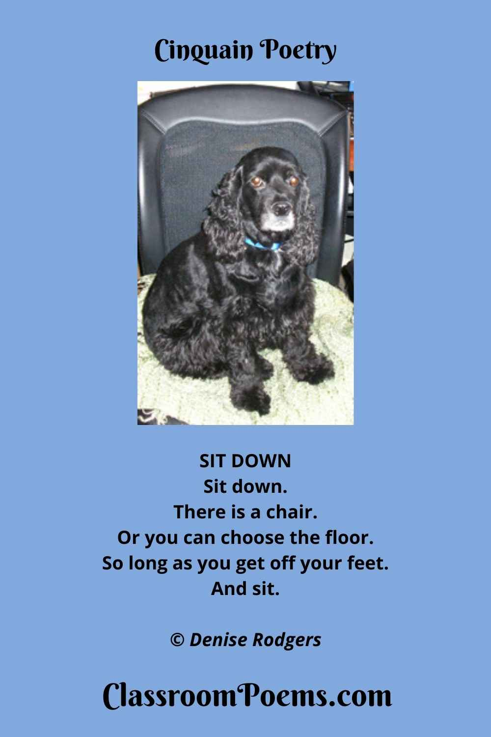 COCKER SPANIEL Cinquain Poem by the Poetry Lady Denise Rodgers on ClassroomPoems.com.